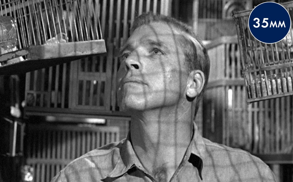 Actor Burt Lancaster gazes upwards; he is surrounded by bird cages.