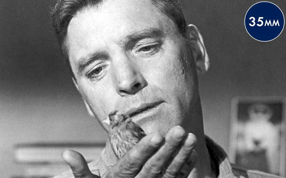 Close-up on actor Burt Lancaster's face; he gazes at a small bird that is perched on his hand.