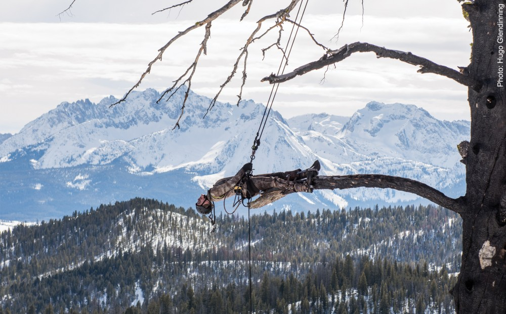 A man in a camouflage climbing outfit hangs from a tree, laying on a branch, with mountains in the background.