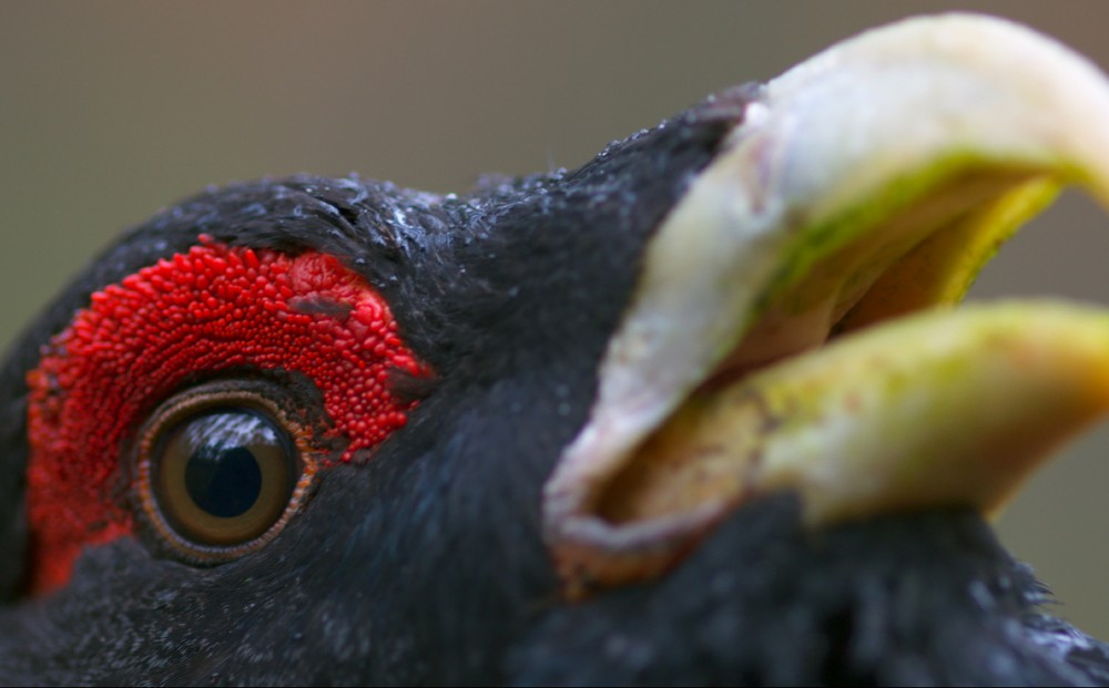 Close-up on a bird with a bright yellow beak and red feathers around its eye.